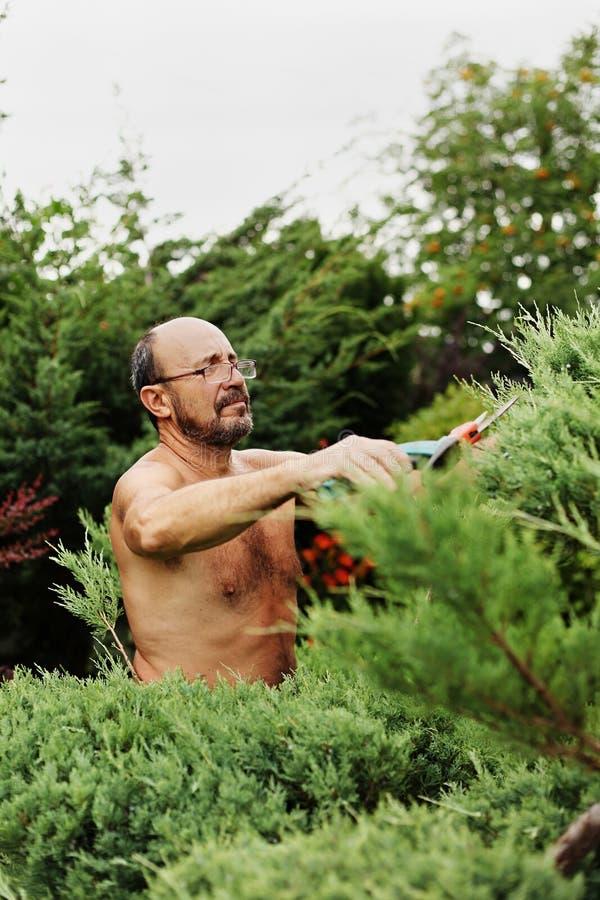 Obsługuje ogrodniczki z cążkami w ręce robi sztuce tnącemu jałowu zdjęcie royalty free