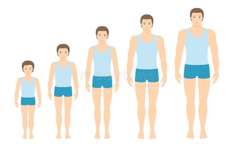 Obsługuje ` s ciała proporcje zmienia z wiekiem ilustracja wektor