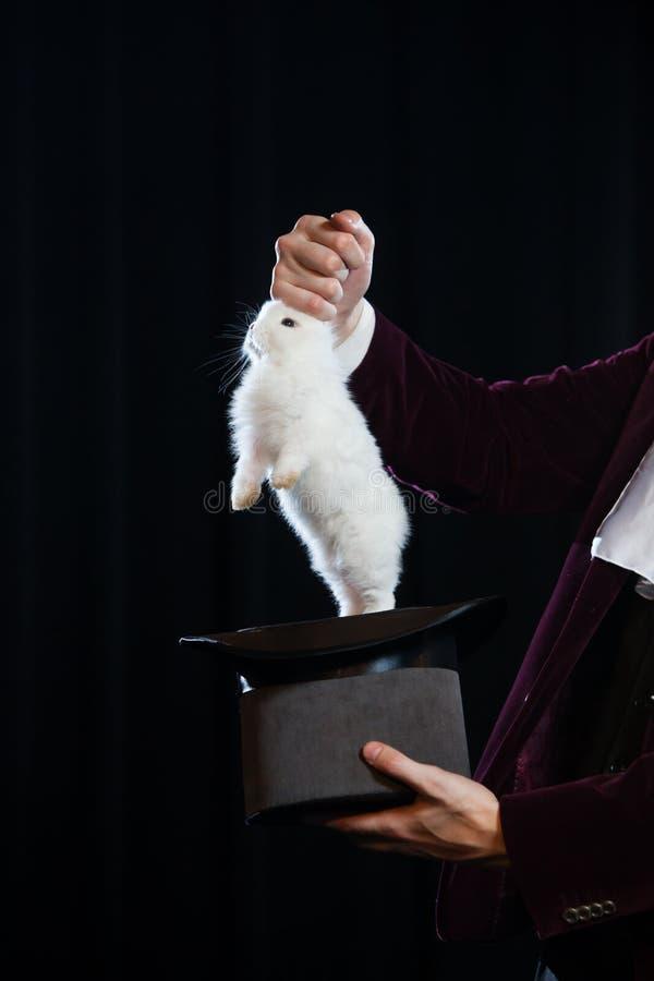 Obsługuje w kostiumu ciągnie królika z numer jeden kapeluszu Zakończenie zdjęcie royalty free