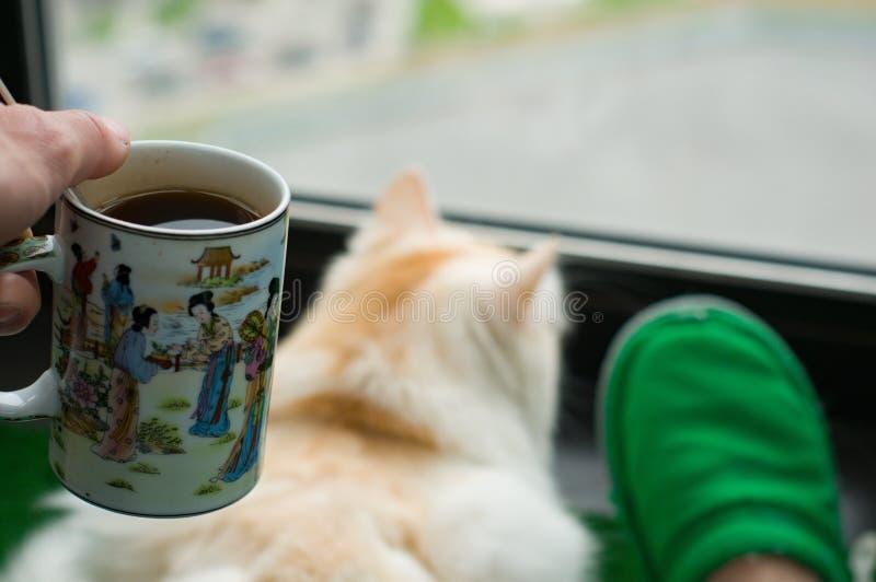 Obs?uguje przy balkonem i patrzeje okno jego kot cit zdjęcie stock