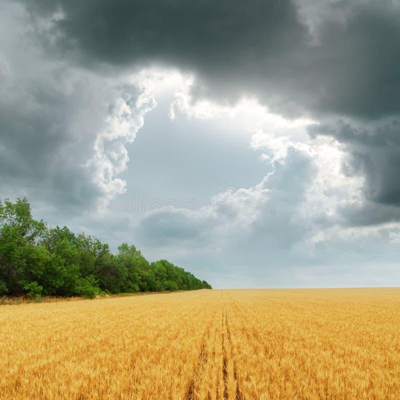Obscurcissez les nuages au-dessus du champ d'or image libre de droits