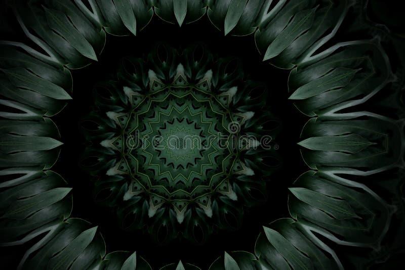 Obscuridade abstrata - teste padrão floral da mandala verde do leav do monstera da palma ilustração royalty free