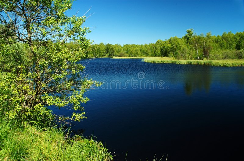 A obscuridade amarra o lago no verde fotos de stock royalty free