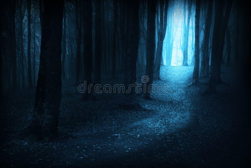 A obscuridade arrasta em um dia nevoento na floresta durante o outono fotografia de stock