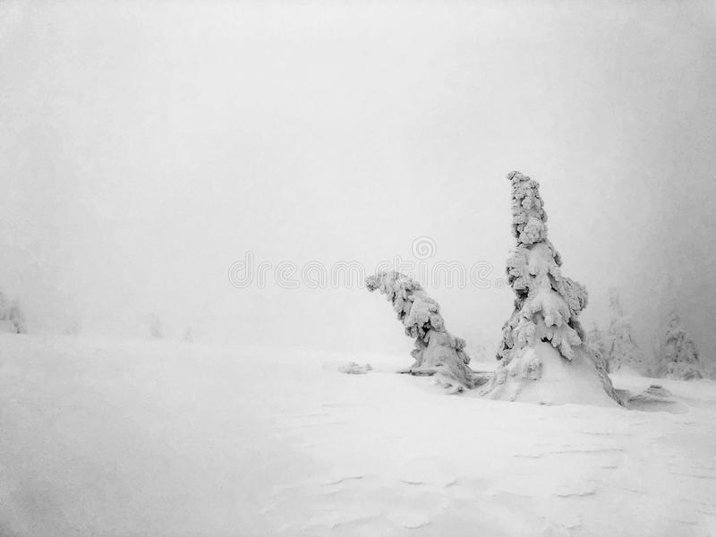 obscuridade branca nas montanhas foto de stock