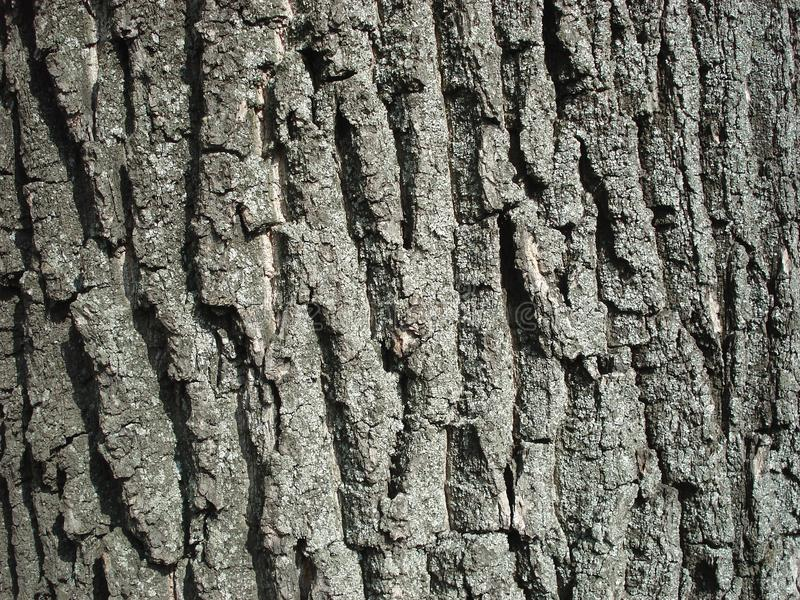 A obscuridade coloriu a casca de árvore com traços de musgo imagem de stock