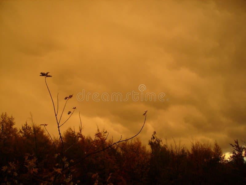 Obscuridade da chuva - nuvens alaranjadas, céu louring sobre a floresta do outono fotos de stock
