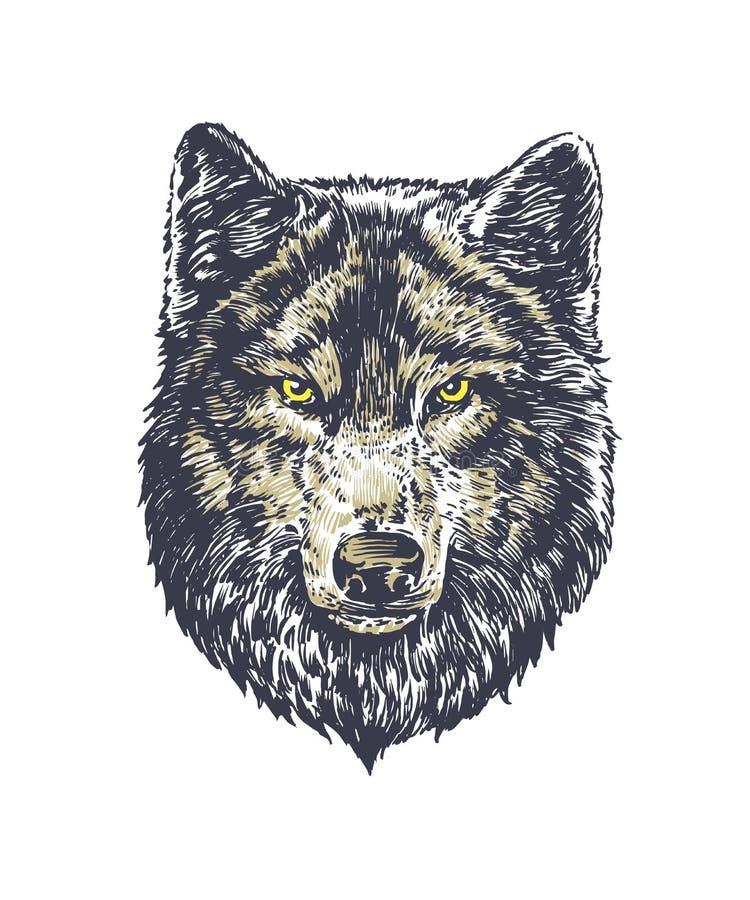 Obscuridade do lobo no fundo branco fotografia de stock royalty free
