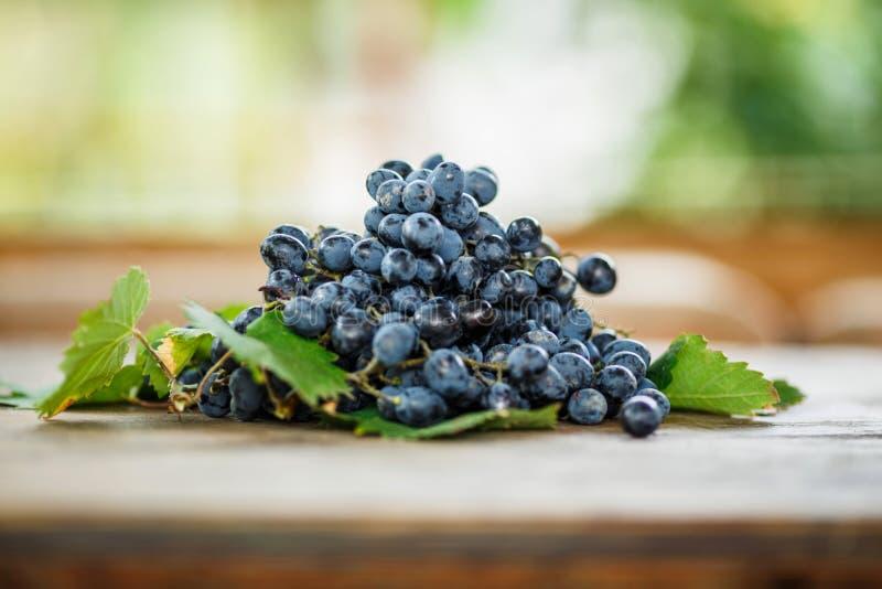 Obscuridade madura deliciosa - as uvas azuis com verde saem em uma tabela de madeira fotografia de stock royalty free