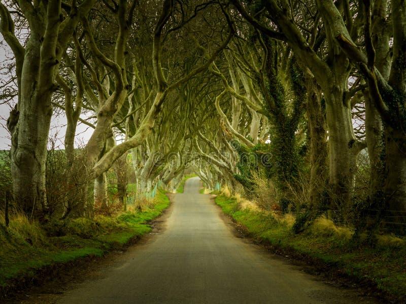 A obscuridade protege a estrada através das árvores velhas imagem de stock royalty free