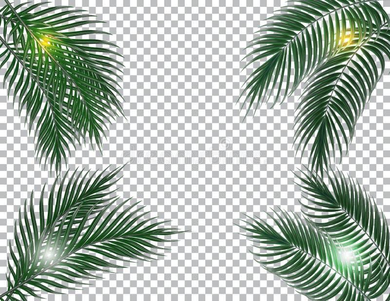 Obscuridade tropical - folhas de palmeira verdes em quatro lados Raios de Sun Isolado no fundo do verificador Ilustração ilustração royalty free