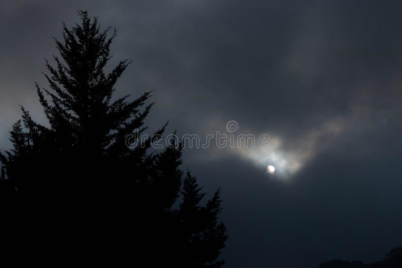 Obscurité de forêt photographie stock