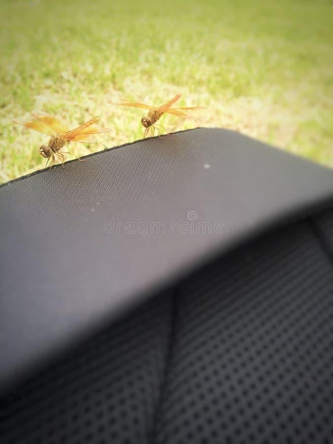 obscurité faite par des insectes photo stock