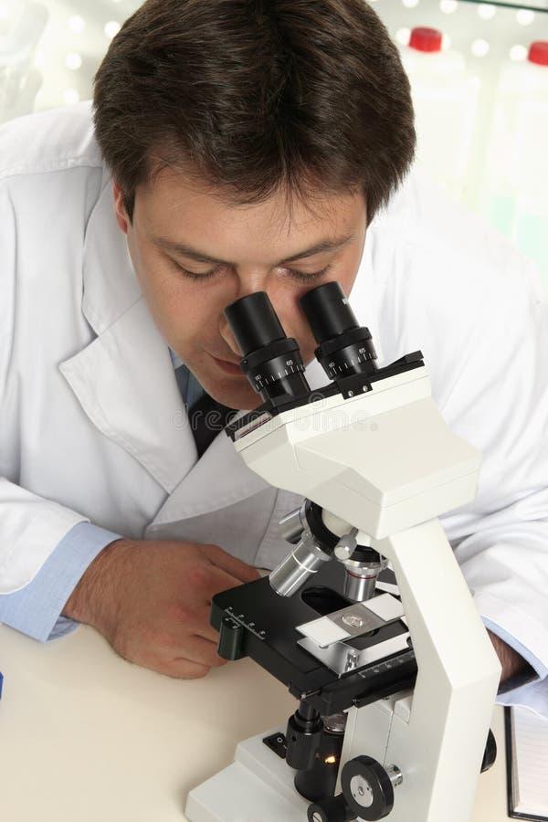Observação através do microscópio fotografia de stock royalty free