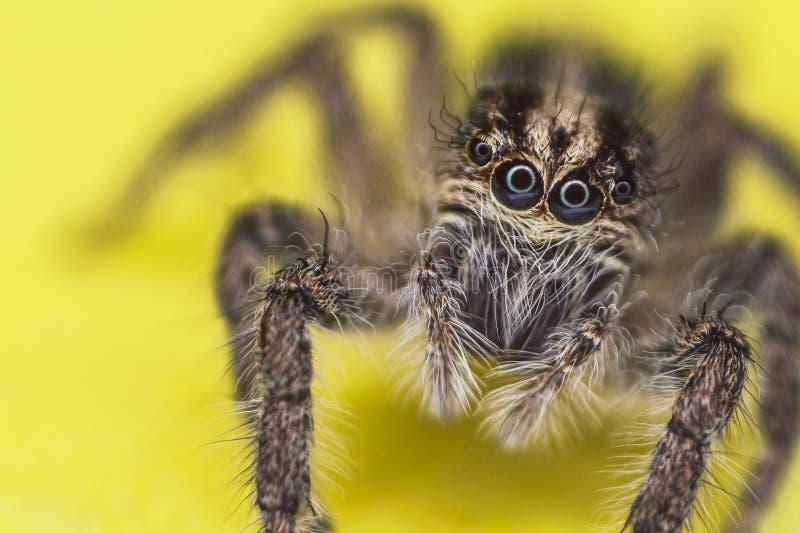 Observação da aranha fotografia de stock