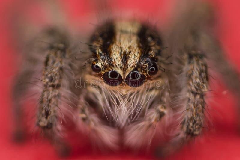 Observação da aranha imagem de stock