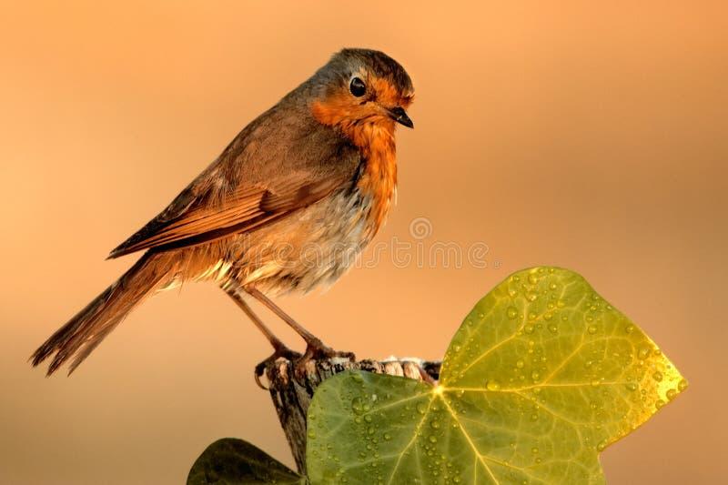 Observação de pássaro na câmera imagens de stock