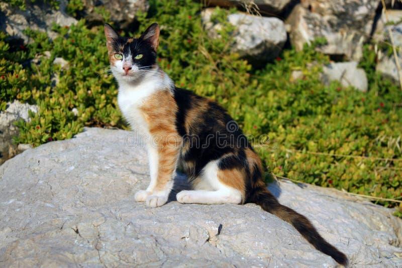 Observação do gato foto de stock