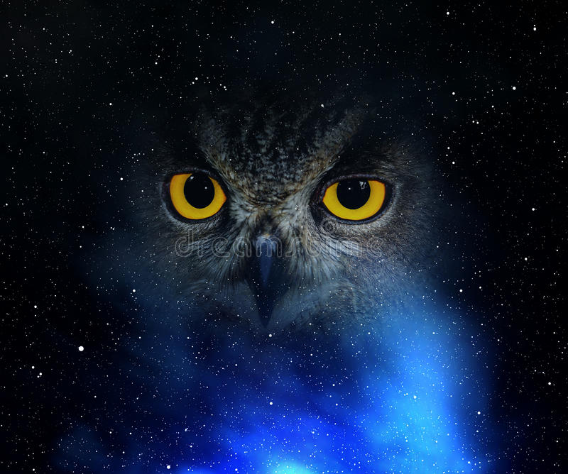 Observa el búho de águila foto de archivo