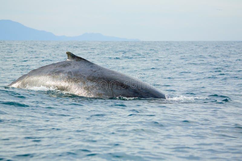 Observación de la ballena foto de archivo libre de regalías