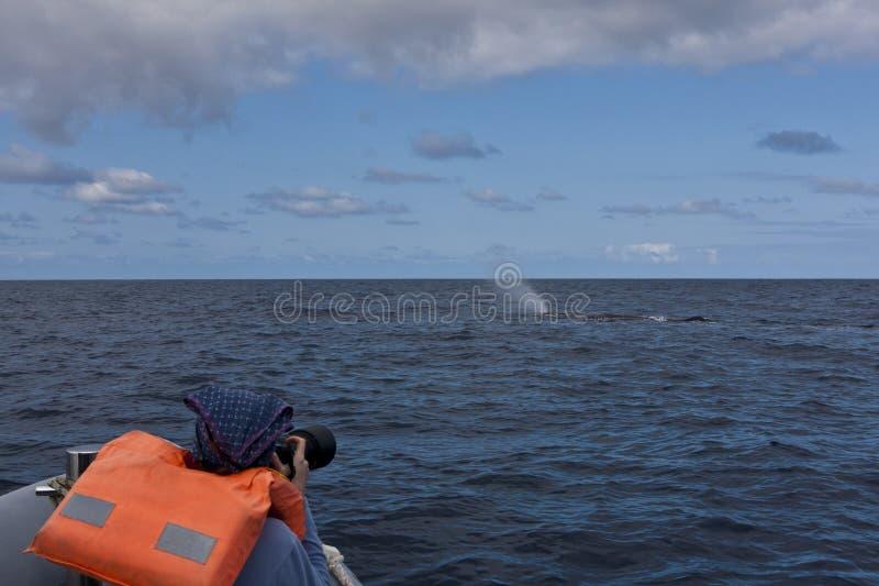 Observación de la ballena imágenes de archivo libres de regalías