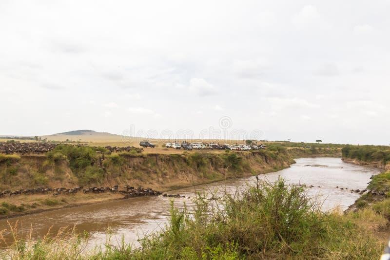 Observación de la travesía Paisaje con las manadas grandes del ñu Kenia imágenes de archivo libres de regalías