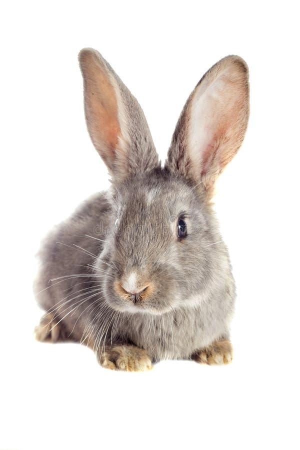 Observación divertida del conejo fotografía de archivo libre de regalías