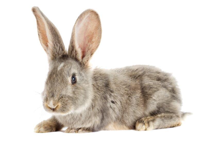 Observación divertida del conejo imagen de archivo