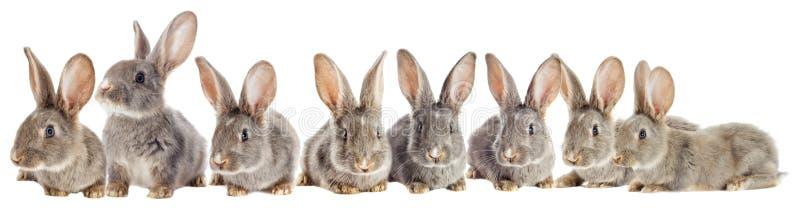 Observación divertida del conejo foto de archivo