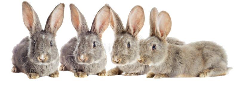 Observación divertida del conejo foto de archivo libre de regalías