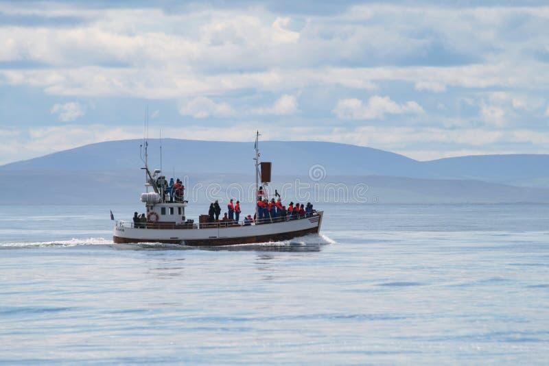 Observaci?n de la ballena imágenes de archivo libres de regalías