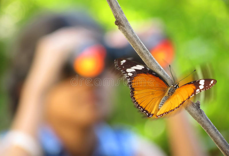 Observando a beleza da natureza imagens de stock