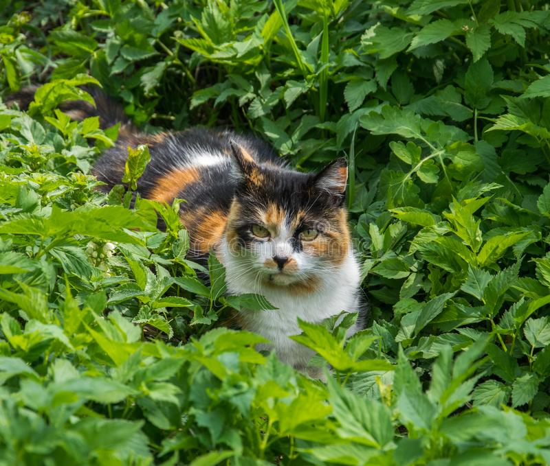 Observant, charming cat lying in the grass in the garden royalty free stock photo
