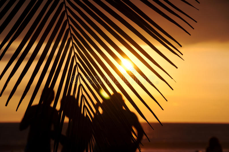 Observateurs tropicaux de coucher du soleil photo stock