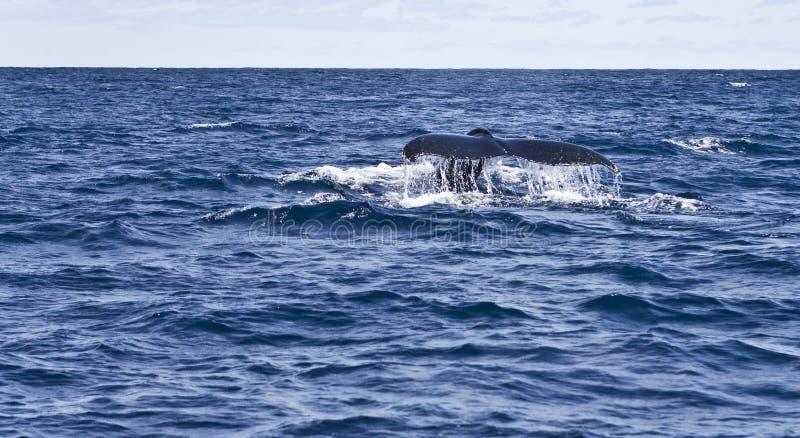 Observation de baleine photos stock