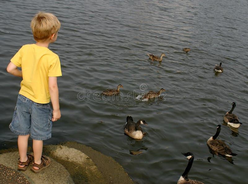 Observation Des Oiseaux Photos stock
