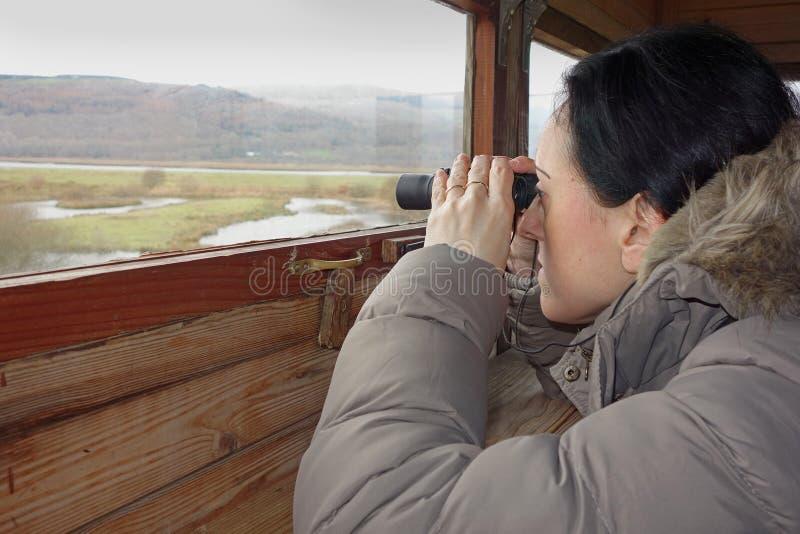 Observation des oiseaux image stock