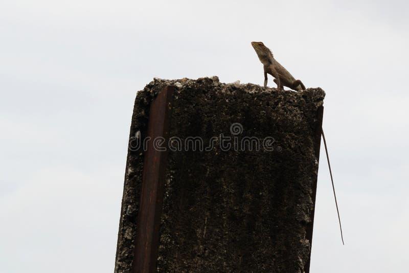 Download Observation Post stock photo. Image of observation, post - 11859226