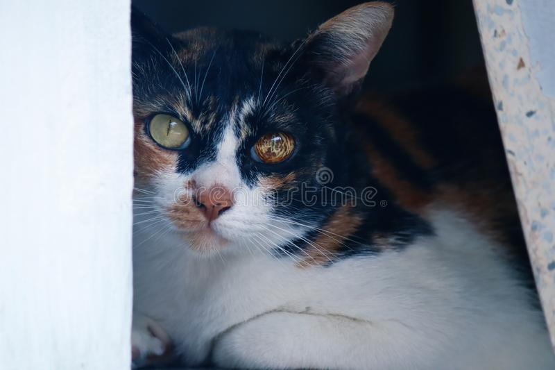 Observe le chat image stock
