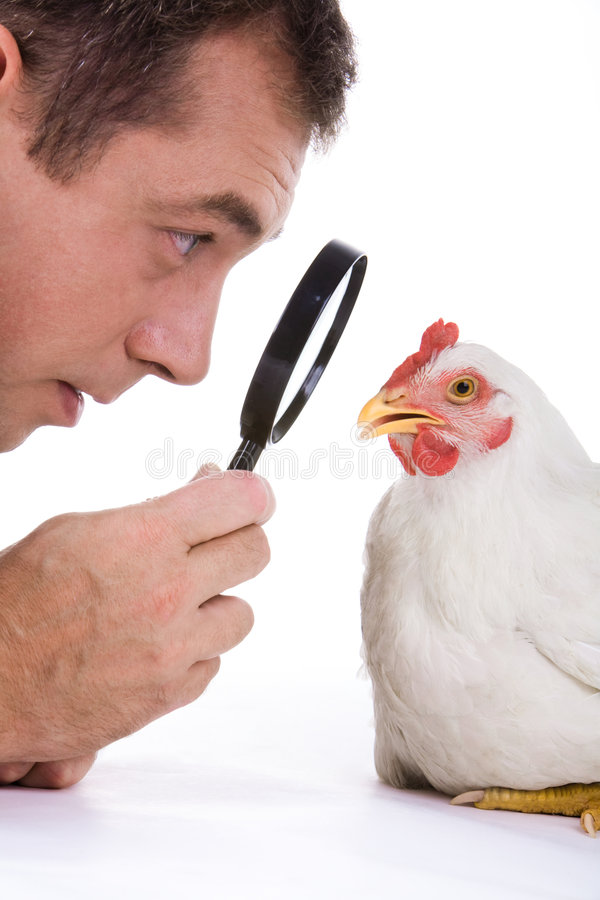Observing. Close-up of observant man holding lens ands looking through it at white hen