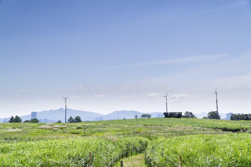 Obserwatorska platforma w srebnej trawy polu fotografia royalty free