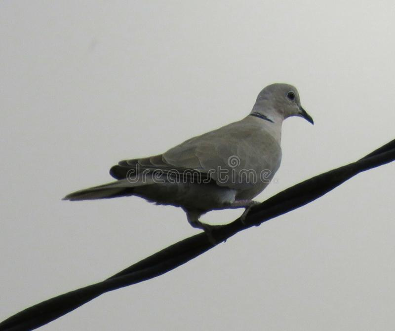 obsiadanie ptasi drut fotografia stock
