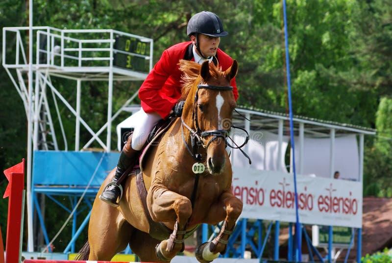 Obstáculo de salto do cavalo imagem de stock