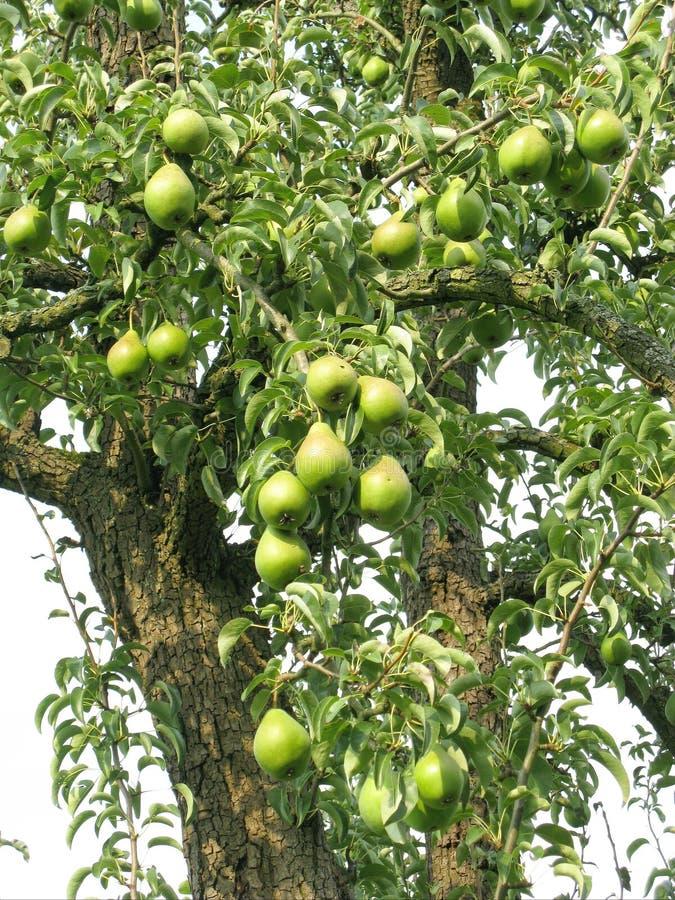 Obstbaum stockfotografie
