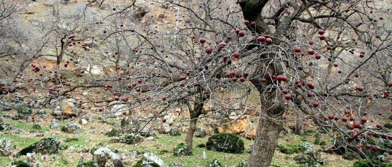 Obstbaum stockfotos