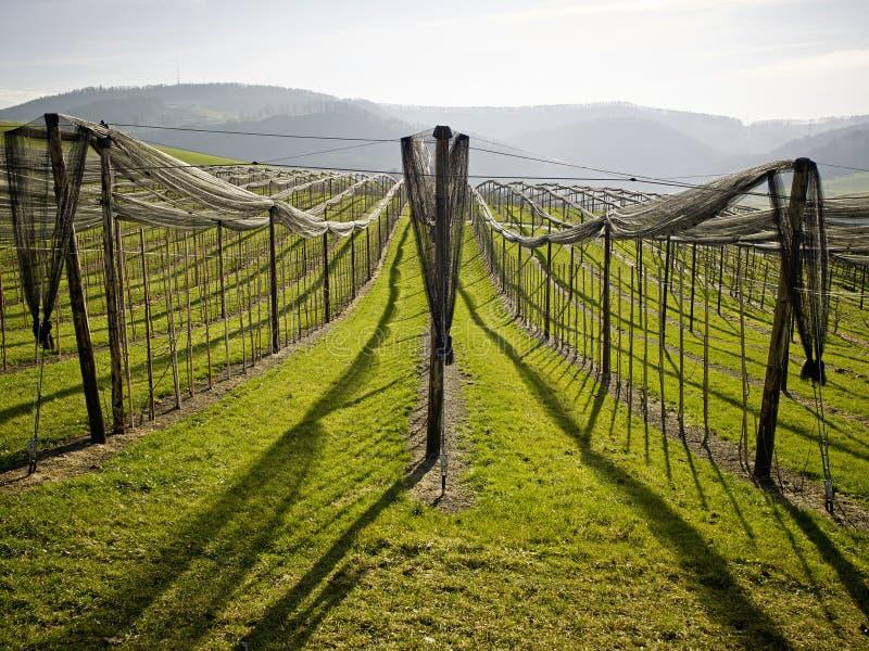 Obstbaum-Landschaft Jura Switzerland stockfotografie