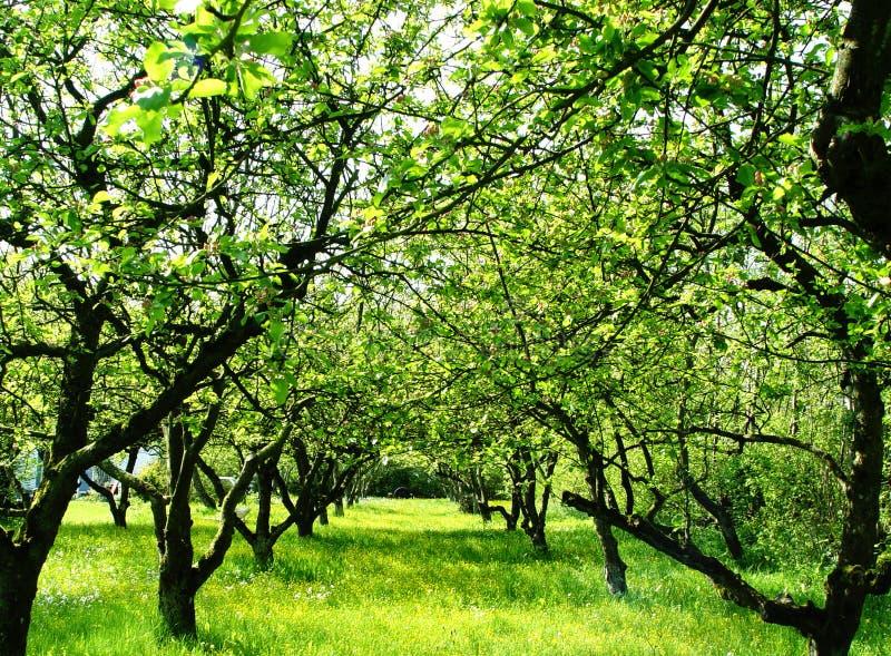 Obstgarten stockbild