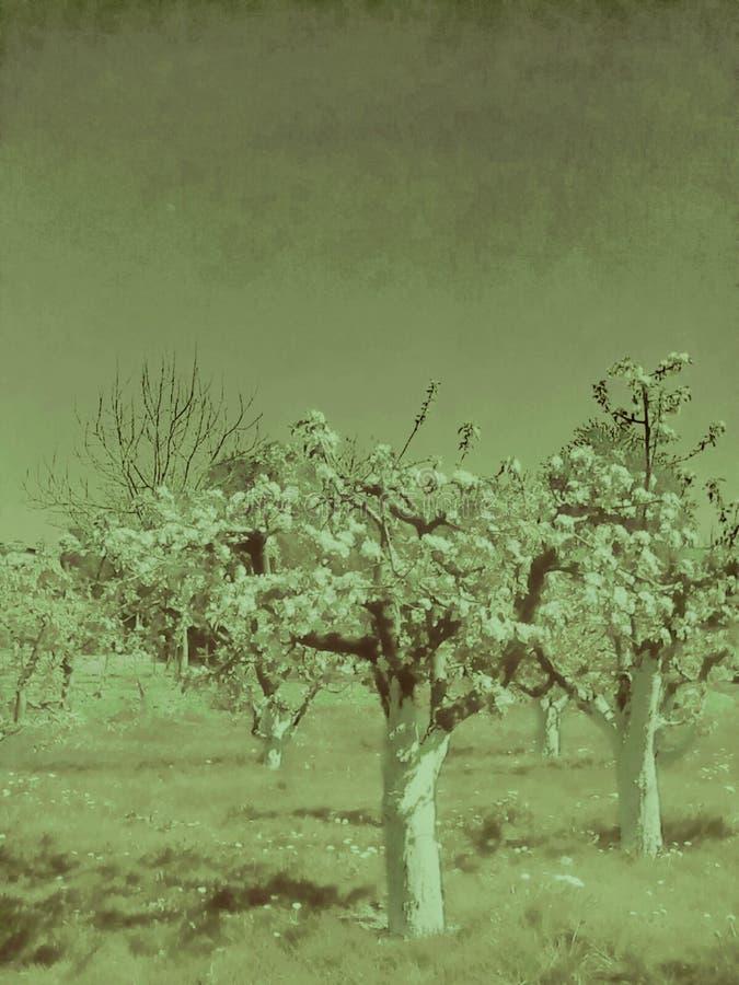obstgarten stockfotografie
