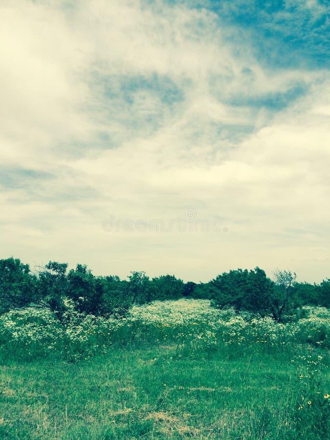 Obstgarten im Sommer mit Gänseblümchen lizenzfreie stockfotografie