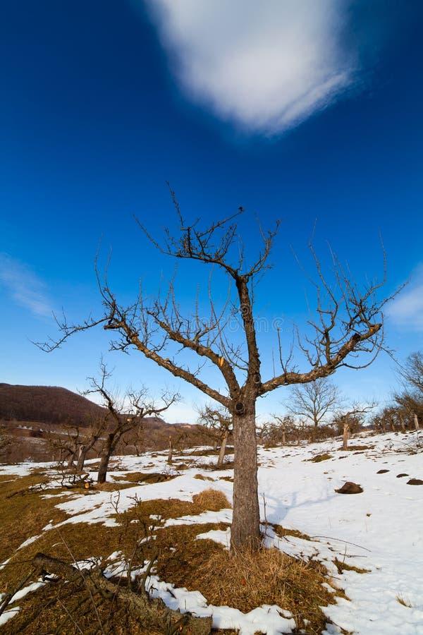 Obstgarten im Winter lizenzfreie stockbilder